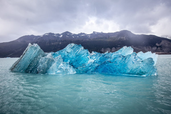 Glacier Kings (C) Joshua Hutchins-8491