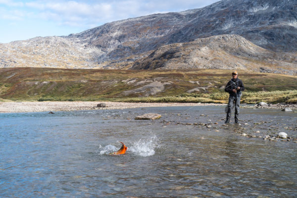 The sea-run Arctic char in Kangia River are not only beautiful but will put up a real fight once hooked