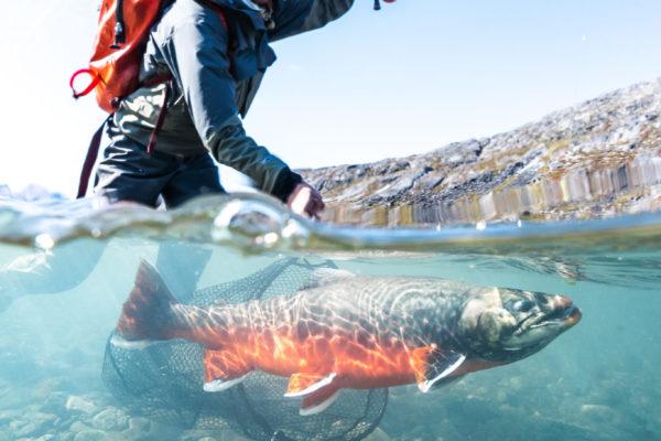 Greenland Underwater-01656