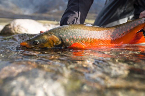 Hutchins_Josh_190903_FISH-03210